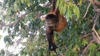 Monkey Island in Lake Nicaragua